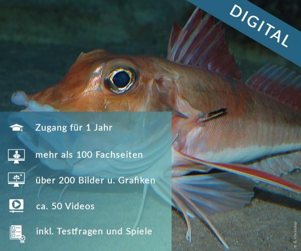 Digitale Arbeitsblätter Meeresfische