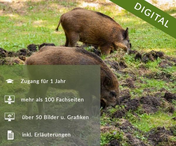Digitale Arbeitsblätter Jagdrecht Bayern