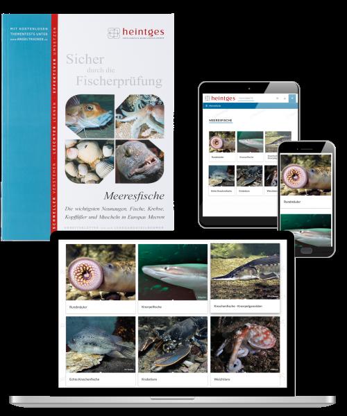 Kombiangebot Arbeitsblätter Meeresfische Print & Digital