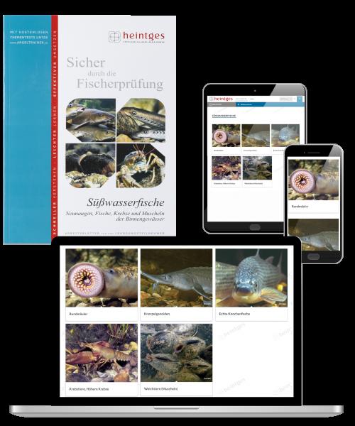 Kombiangebot Arbeitsblätter Süßwasserfische Print & Digital