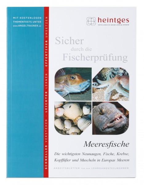 Meeresfische - Die wichtigsten Neunaugen, Fische, Krebse, Kopffüßer und Muscheln in Europas Meeren