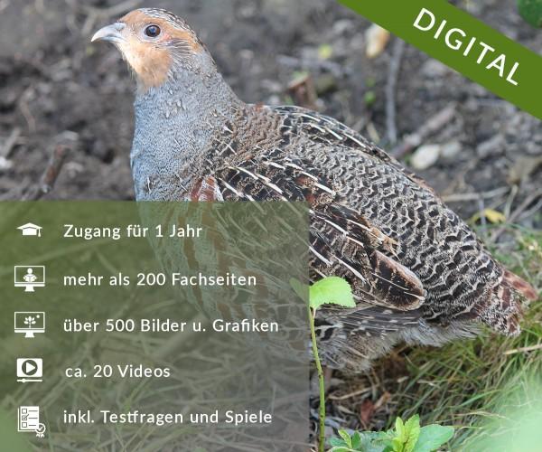 Digitale Arbeitsblätter Federwild