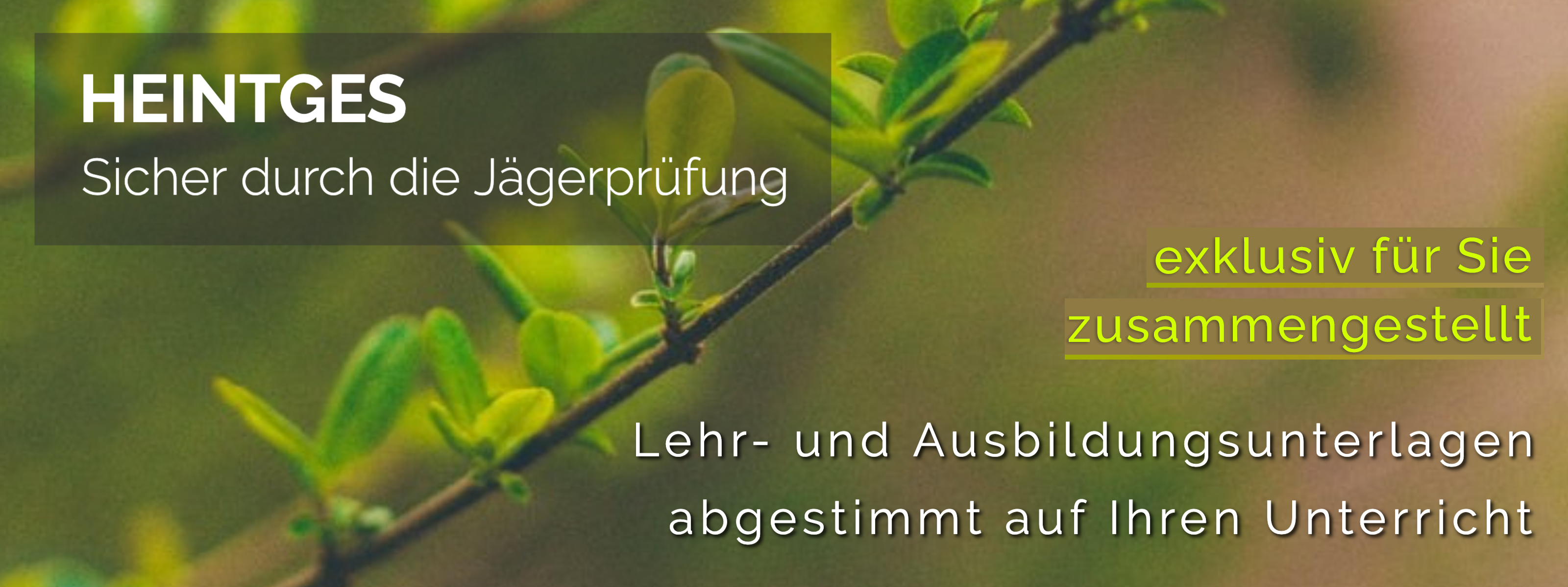 Newsletter-HEADER-Individuell